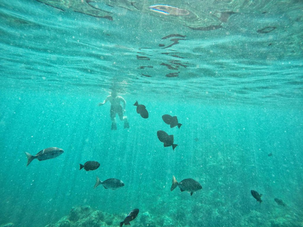 Great snorkeling adventure off Kauai's Na Pali Coast with Napali Experience